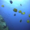 Thailand: duiken op Koh Tao